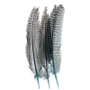 Guinea Fowl Quill 6-9'' Turquoise